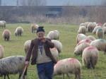 Shepherd ('07)