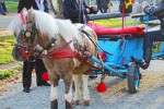 Gypsy horse-drawn wagon